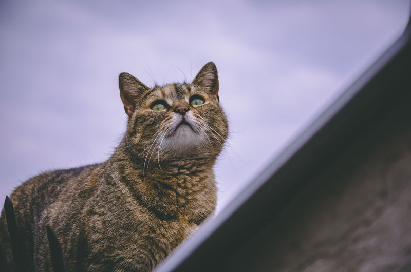 Pets One Animal Domestic Cat Domestic Cat Domestic Animals Mammal Feline Looking No People Whisker Looking Up Close-up Animal Body Part Portrait Indoors  Emotion Tabby Animal Eye