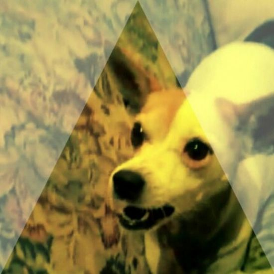 Dog Taking Photos Hello World