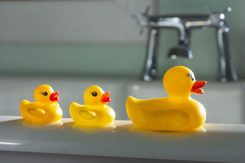 Three toy ducks on the edge of a sunlit bath tub Bath Bath Time Family Morning Light Taps Animal Representation Bathroom Bathtub Bird Childhood Chrome Close-up Domestic Bathroom Domestic Room Duck Ducks Focus On Foreground Home Indoors  No People Rubber Duck Selective Focus Still Life Toy Yellow