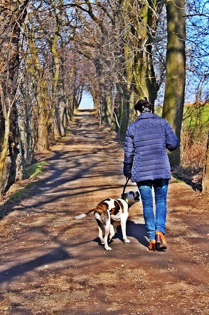 dog, pets, one animal, full length, rear view, walking, domestic animals, one person, tree, real people, mammal, casual clothing, day, german shepherd, outdoors, lifestyles, men, nature, one man only, adult, adults only, only men, people