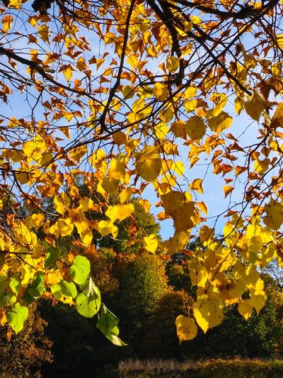 Close-up of yellow tree against sky