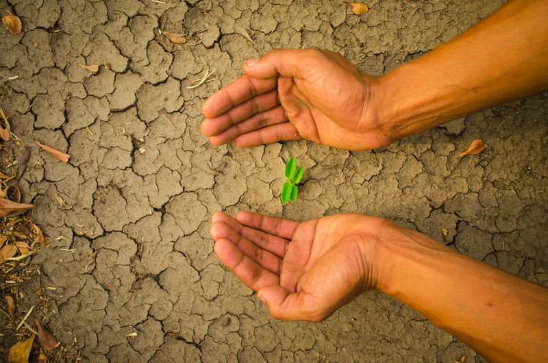 plant glowing on dry sand, Hope concept Drought Desert Hope Plant A Helping Hand Adult Arid Climate Charity And Relief Work Close-up Concept Cracked Day Dirt Drought Dry Glowing Hand Heart Heart Shape Human Body Part Human Hand Humanitarian Aid Hungry Nature Outdoors People Pleading
