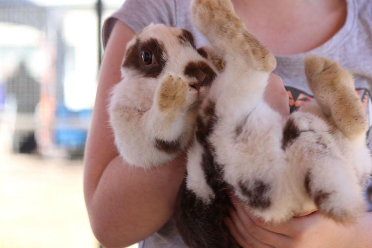 Rabbit Animal Love Animal Nose Pet EyeEm Selects Pets Friendship Bonding Portrait Embracing Affectionate Cute Close-up Nose Animal Ear Animal Hair Animal Eye Animal Face Paw Pet Owner