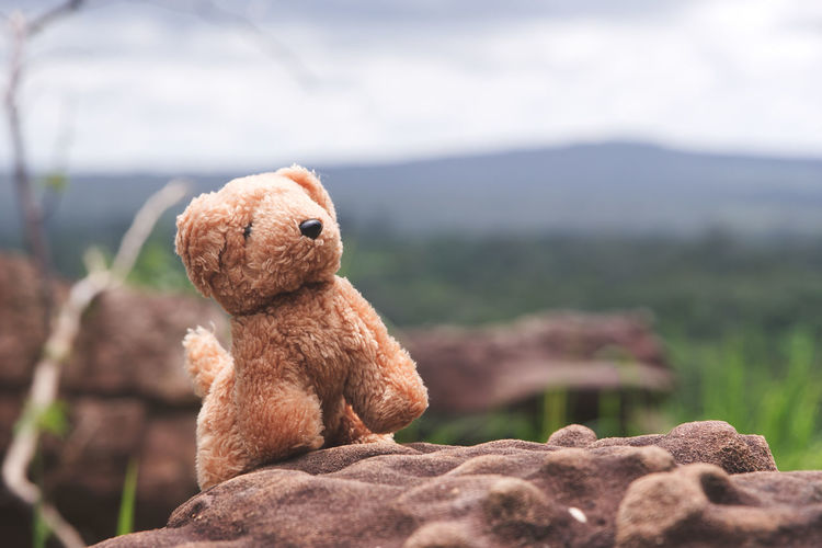 Close-up of stuffed toy on field against sky
