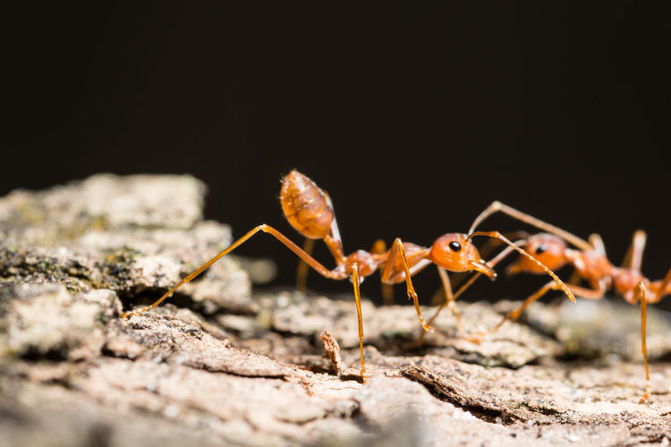 Close-Up Of Two Ants Outdoors