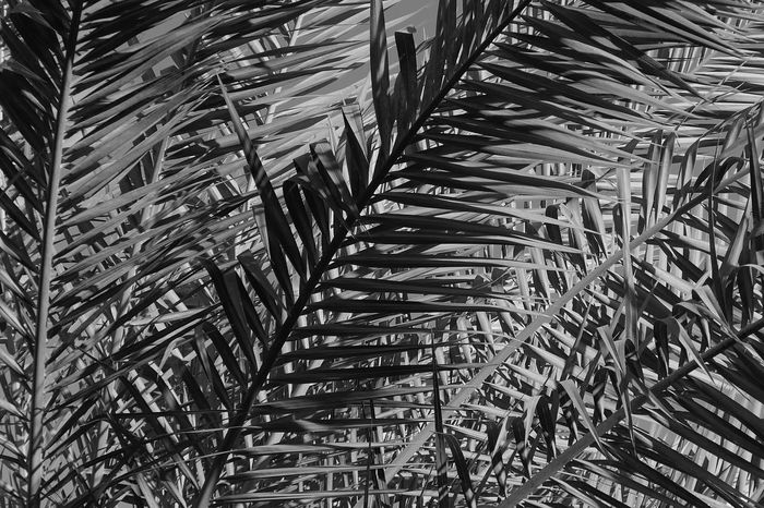 Natural Pattern Full Frame No People Backgrounds Growth Day Plant Tree Nature Outdoors Pattern Palm Tree Tropical Climate Beauty In Nature Sunlight