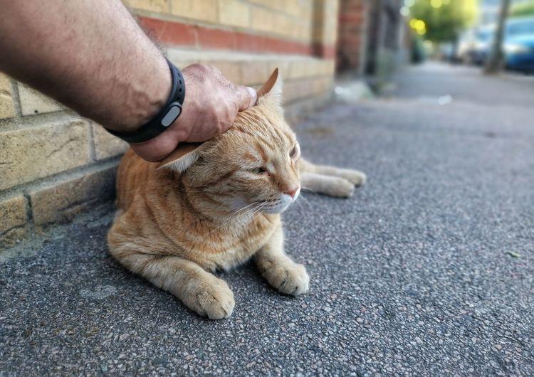 Full length of hand holding cat on street