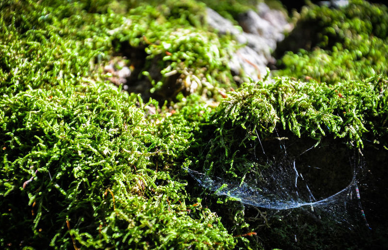 Green Beauty In Nature Close-up Cobweb Day Focus On Foreground Green Color Growth Hammock Land Moss Motion Nature No People Outdoors Plant Purity Rock Rock - Object Selective Focus Spider Web Tranquility Tree