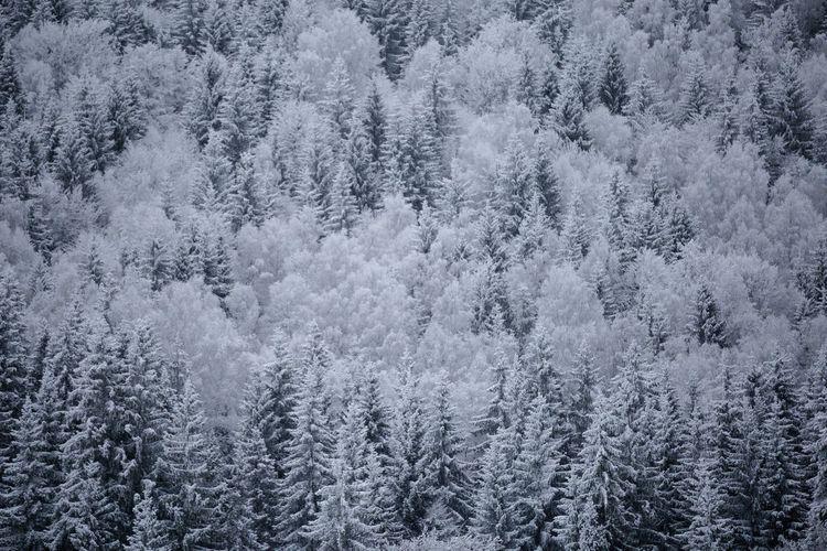 Full frame shot of frozen trees