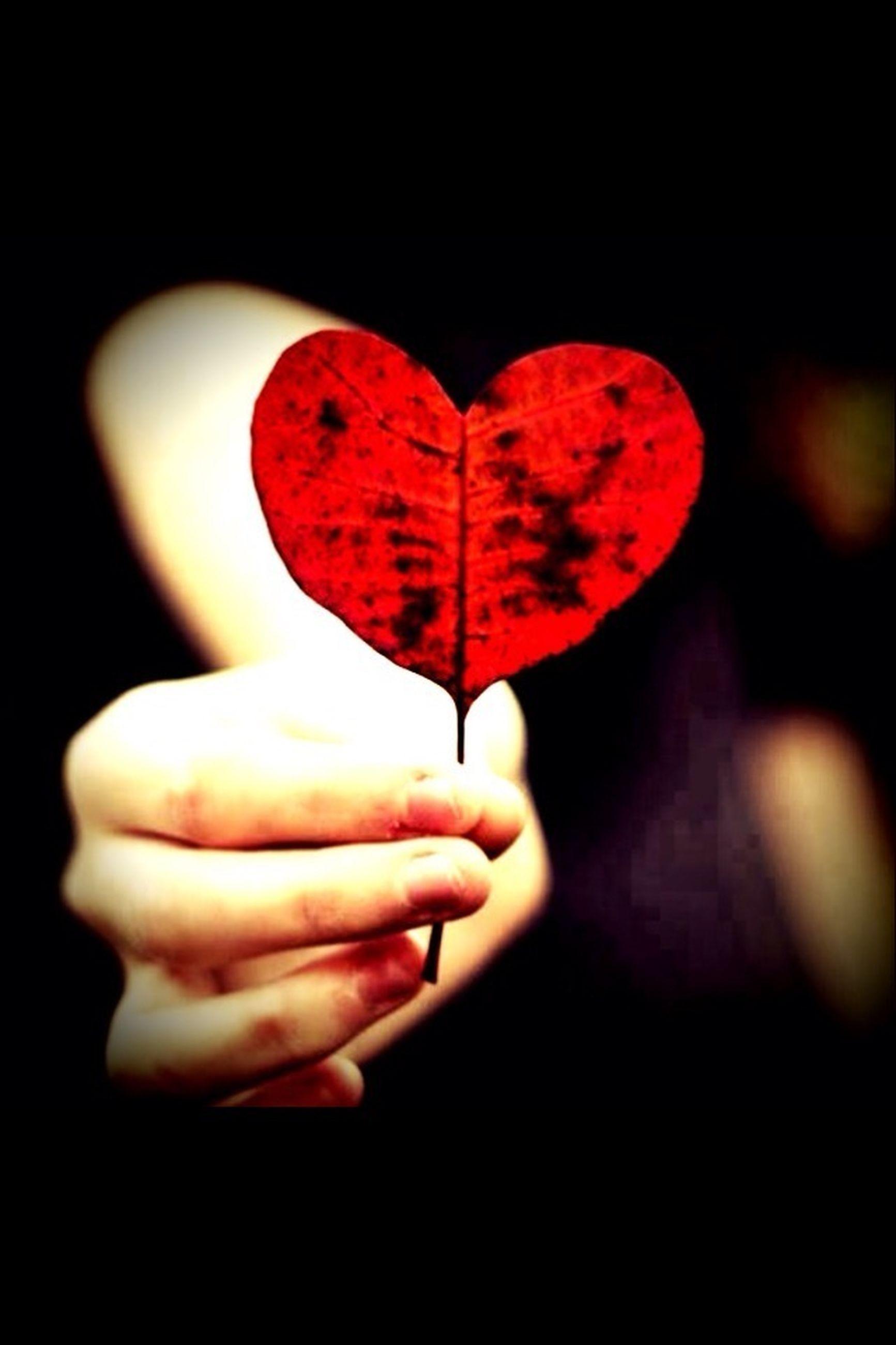 red, close-up, leaf, studio shot, single object, focus on foreground, heart shape, black background, love, indoors, no people, freshness, selective focus, nature, autumn, still life, maple leaf, leaf vein, stem, day