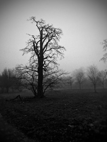Mysterious Mystery Nature Photography Nature London Hyde Park Blackandwhite Park Fog Foggy Horror Tree Taking Pictures Xmas