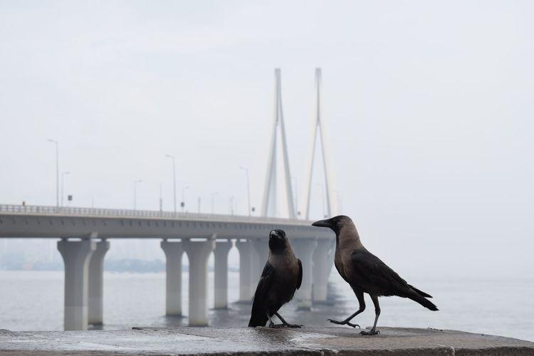 Birds perching on bridge over sea against sky