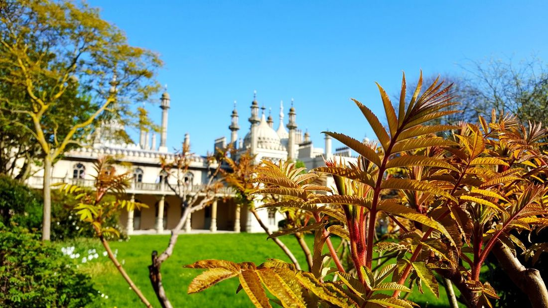 Asian Castle Blue Sky Low Angle View Contrast Briton Mosque Behind Leaves Tree City Cityscape Palm Tree Clear Sky Blue Sky Architecture Building Exterior Plant Palace Botanical Garden Flowering Plant Tropical Flower Palm Residential Structure Backyard Royalty Pavilion Plant Part The Traveler - 2018 EyeEm Awards The Great Outdoors - 2018 EyeEm Awards