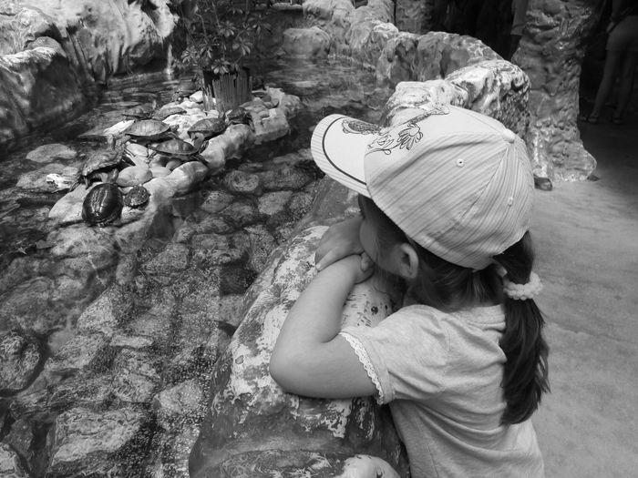 Girl Wearing Cap Looking At Turtles In Zoo