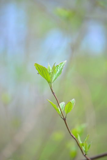 Plant Leaf Green Color Plant Part Growth Beauty In Nature Focus On Foreground Close-up Nature Day No People Outdoors Tranquility Beginnings Selective Focus Vulnerability  Fragility Plant Stem Freshness New Life