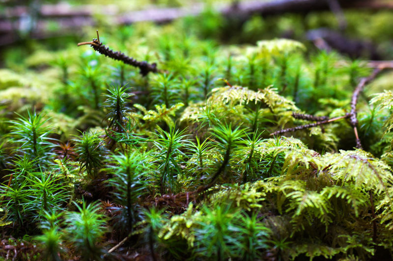 Forest Floor Forest Ground Forestground Green Green Moss Macro Macro Photography Macro Plants Moss Nature Plant Wet Ground Wet Moss