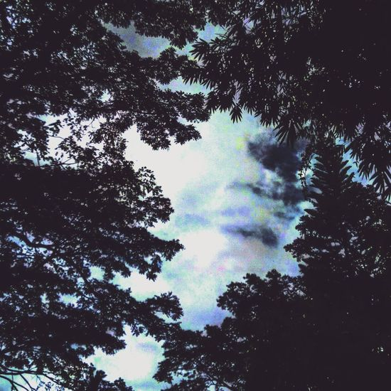 """""""The Everlasting Beauty"""" Tree Sky Nature Low Angle View Beauty In Nature Growth Tranquility No People Sunlight Day Outdoors Scenics Forest Cloud - Sky Treetop Eyeemphotography EyeEm Nature Lover Eyeem Market Eyeem Philippines EyeEm Best Shots - Landscape"""
