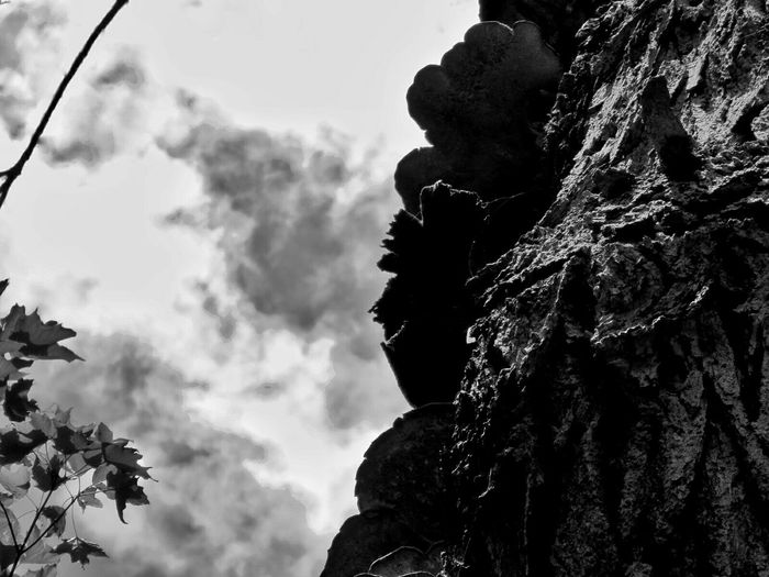 so here is my beloved dead Tree , fueling new life like nobody's business. this shot immediately preceeded some serious emotional trauma... Light And Shadow Textures And Surfaces Trees Shades Of Grey Black And White Monochrome Looking Up Creative Light And Shadow The Great Outdoors - 2016 EyeEm Awards