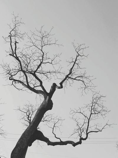 Black And White Friday Tree Flying Animals In The Wild Animal Wildlife Bird Nature Branch Sky Blue No People Beauty In Nature Clear Sky Outdoors Bare Tree Low Angle View Day Animal Themes Water Mammal Bird Of Prey Galaxy Note 5 EyeEm