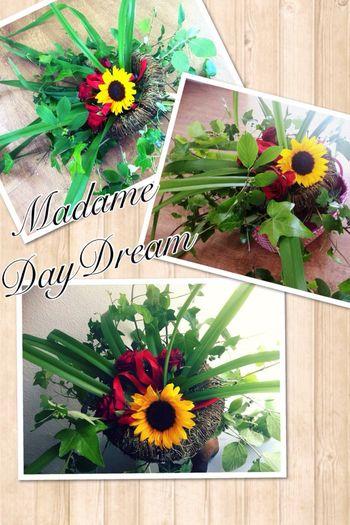 Sonnenblume Madame Daydream Flower