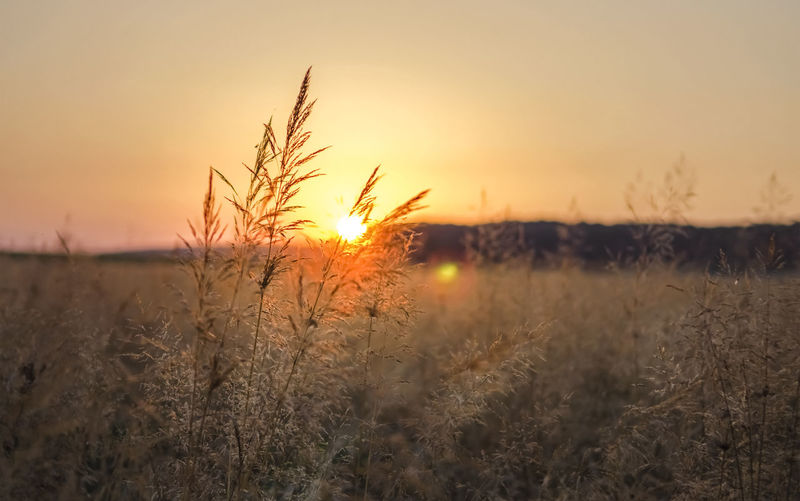 Orange sunset behind grass blade Sunset Plant Sky Tranquility Beauty In Nature Growth Scenics - Nature Environment Idyllic Stalk Focus On Foreground Blade Of Grass Tranquil Scene Field No People Nobody Landscape Nature Sun Outdoors Orange Color