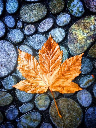 Fall has fallen on my doorstep Tadaa Community Fall Autumn Danagården
