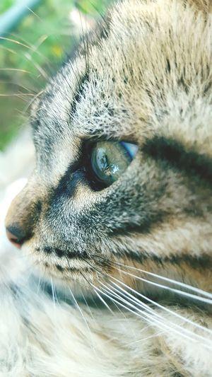 Pets Whisker Feline Animal Head  Portrait Outdoors Day