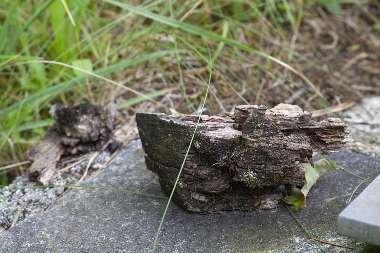 CLOSE-UP OF DRY LEAVES ON ROCK
