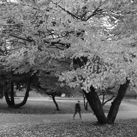 A Sunday walk in the park Nygårdsparken Bergen Norway Autum Park Nature Outdoors Footpath Tree Leaf Blackandwhite Streetphotography Noedit Nofilter Canon Canonphotography Canonphoto Canoneos750d