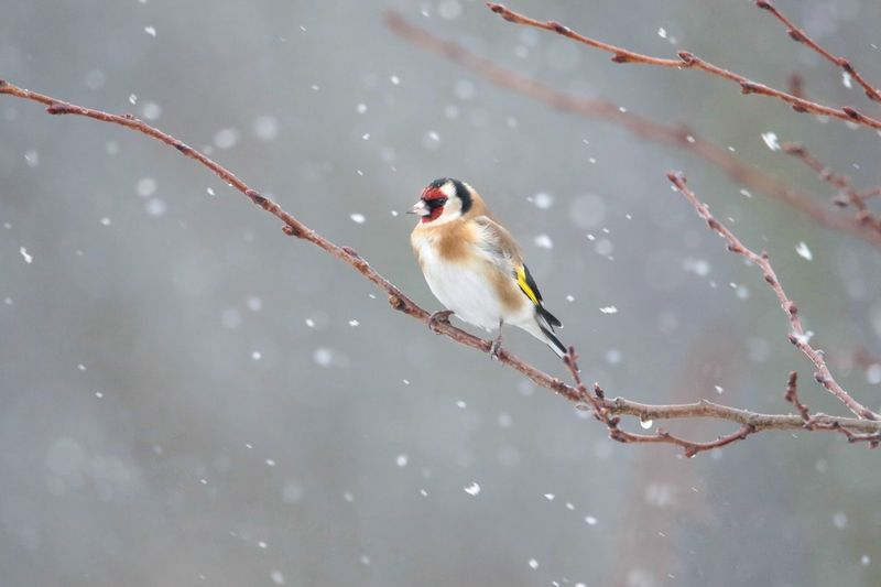 Close-up of bird perching on branch during winter