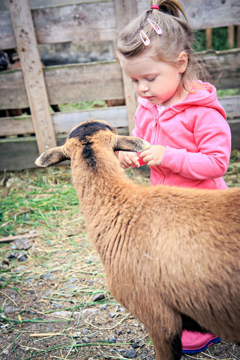 Cute Girl Looking At Goat In Farm