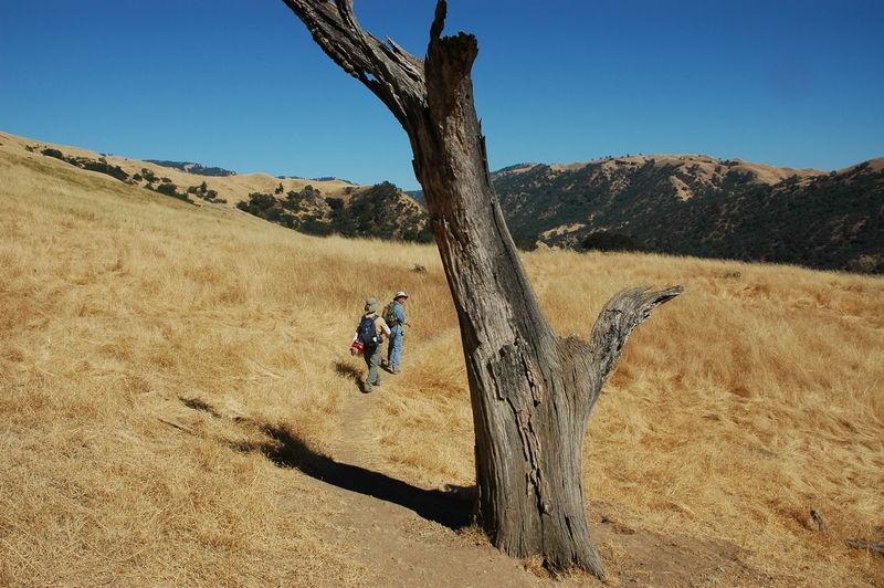 Clear Sky Desert Field Hiking Landscape Men Sunlight Tree Walking The Following Mission Peak Regional Reserve Fremont California Feel The Journey