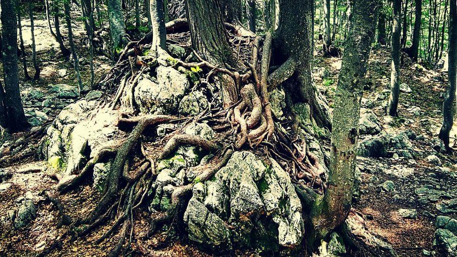 Mothernature Nature Three Rock Roots Of Tree Woods Harrypotter Slovenia Logarska Dolina Colour Of Life