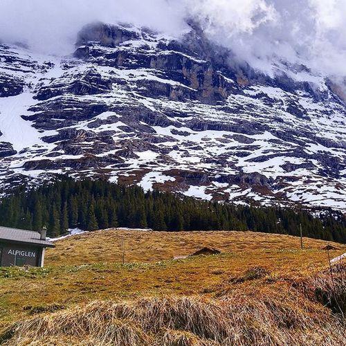 시각적으로도 위용이 대단한 아이거 북벽. 이거 오르다 돌아가신 산악인들도 많다고... 아이거, 노스페이스...음...어디서 들을 듯? ^^ 아이거 아이거북벽 노스페이스 융프라우요흐 융프라우 알프스 스위스 여행 Eiger Eigernordwand Alps Switzerland Swiss Mountains Tour