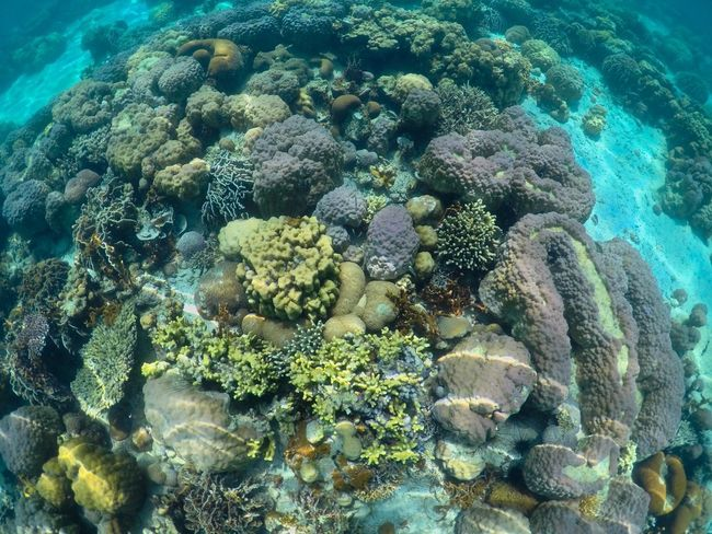 Another world Philippines Coral Palawan Coron, Palawan Island Sea Underwater Sea Life UnderSea Water Coral Animals In The Wild Nature Beauty In Nature Marine EyeEmNewHere