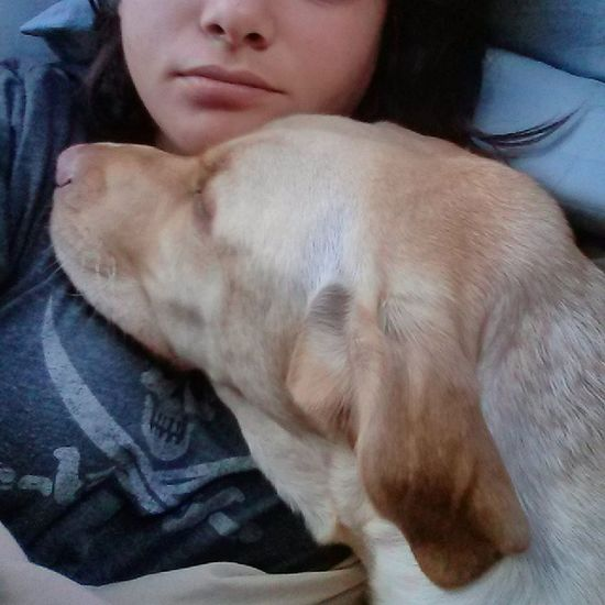 My giant cuddlemonster. I love him soooo much. <3 Barleythepupofpower Yellowlab Sleepytime WakingUp furrychild dog sandiego california sleepingin