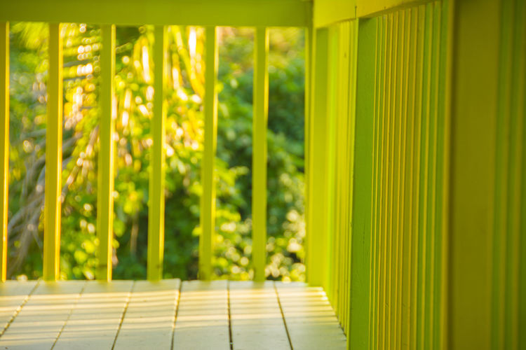 Vibrant Color Deck Palm Tree Green Hawaii Island Island Life Stock Photo Stock Photography Yellow Travel Destinations Travel Tranquility Peace Tropical Climate Tropical Good Vibes Vibrant Colors Bar Bars BBQ Friends Destination Gecko