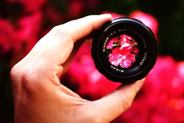 Flower through the lens Lens Nikon Nikkor 50mm 1.4 Vintage Nature Beauty In Nature Human Hand Holding Illuminated Close-up