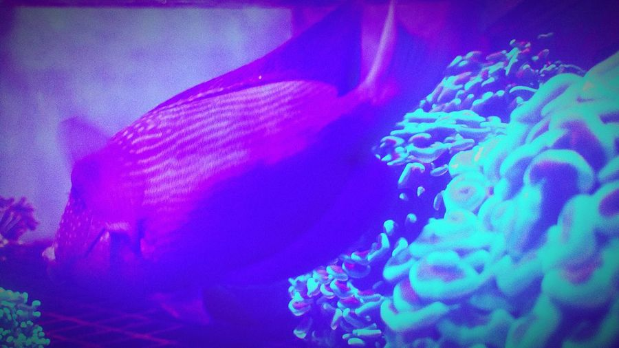 Aquarium Marine Fish Marine Fish Living Coral Check This Out Taking Photos Popular Photos Have A Look Eyeem Nature In My Day Today Neon Color Showcase March Blue Wave
