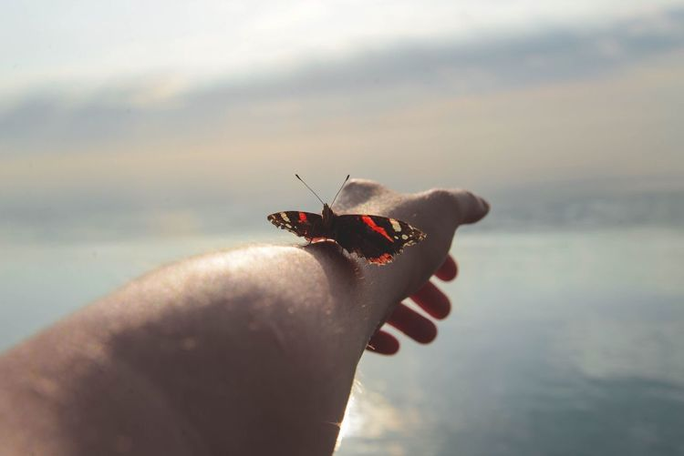 Butterfly Perching On Human Hand