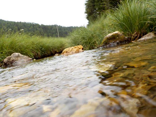 Acqua Limpida Day Dolomiti Italy Fiori Immersione Natura Nature No People Outdoors