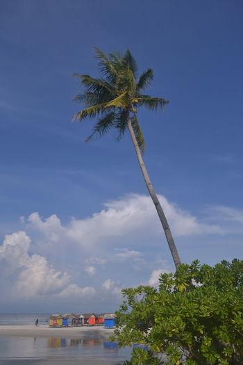 Tree Water Palm Tree Beach Sea Coconut Sky Cloud - Sky
