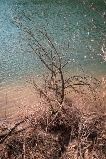 High angle view of bare tree by lake