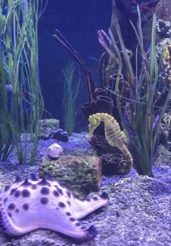 Life Starfish