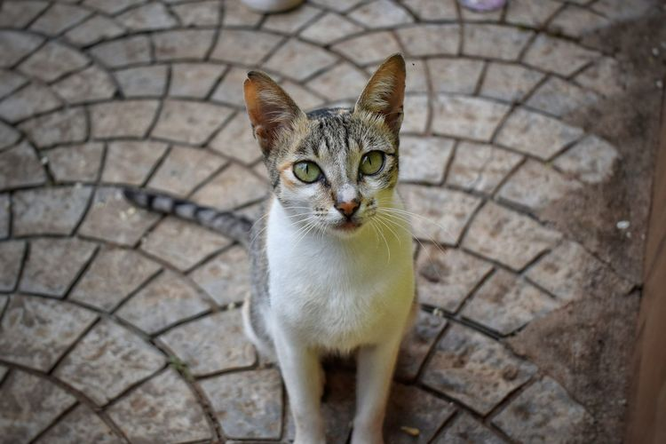 Domestic Cat Nature No People Portrait Kerala Munnar Kerala