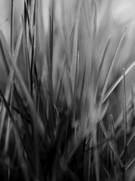 Abundance Agriculture Botany Cereal Plant Close-up Crop  Day Detail Farm Field Full Frame Growing Growth No People Selective Focus Softness Springtime Wheat