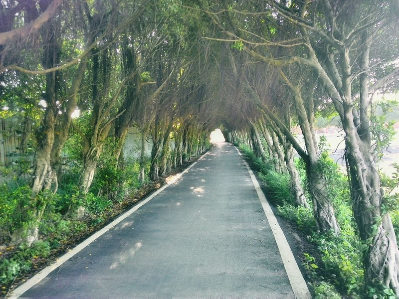 Just Around The Cornerv passing Tree Tunnel on Bicycle Track in nanliao 新竹台湾