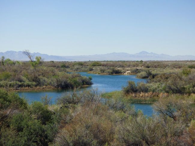 Colorado River Arid Climate Exploring Nature Oasis In The Desert Nature Landscape River Vegetation Mountain Wilderness Clear Sky Water No People Outdoors Grass Beauty In Nature Day Sky Backwater Scenics Peaceful Place Breathing Space