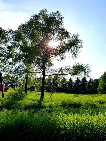 Tree Nature Agriculture Field Beauty In Nature Grass Growth Green Color Rural Scene Outdoors No People Sky Day
