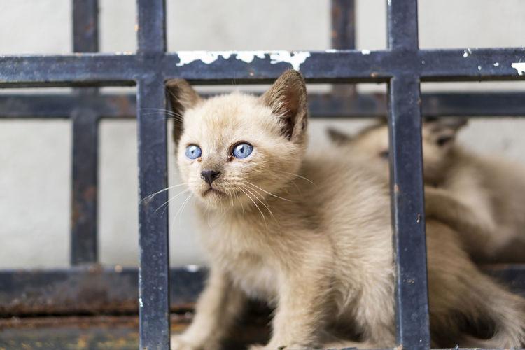 Cat looking through metal fence